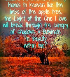 Scriptures of Encouragement ~ Beauty in the Season of Rest
