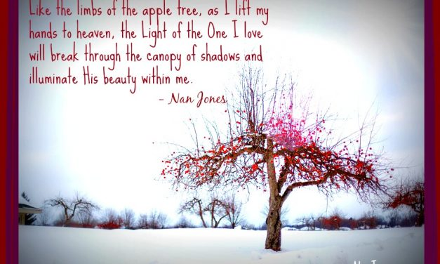 The Apple Tree and Fruit From Another Season