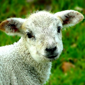 Why fret when we have such a good Shepherd?