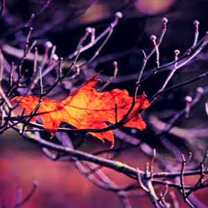 One solitary leaf spoke volumes to me.