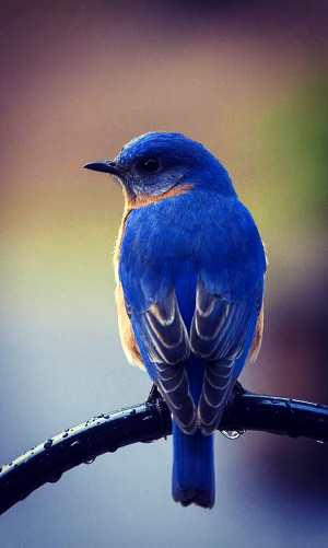 A song in the wind, and three bluebirds turned my eyes on Jesus.