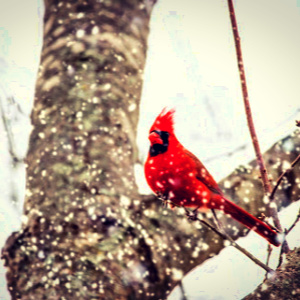The cardinal revealed purpose for the harsh winds.