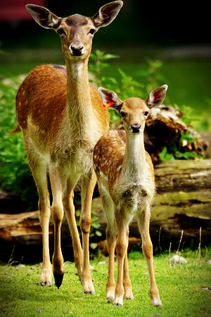 The doe and her fawn reminded me what I needed to do to remedy my numb heart and mind.