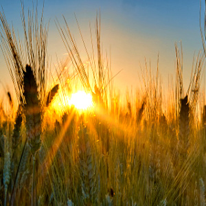 The harvest is ripe, but laborers are few. We must pour God's Living Water on the world's voracious thirst.