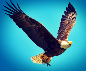 When I am poor in spirit, grant me the wings of an eagle to rise up above the fray.