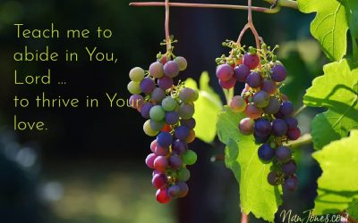 You're the Vine Lord, But My Branch is Gummed Up ~ Prayer
