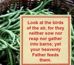 Scriptures of Encouragement ~ A Lesson in Grace
