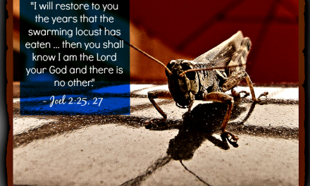 Finding God's Presence ~ In a Locust? Seriously?