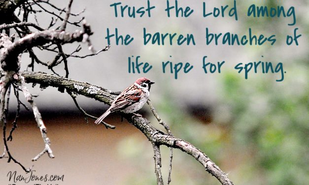 When God Met Me on Barren Branches Ripe for Spring
